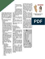 Origen de La Cultura Andina Alumno 1ro