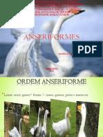 Aves Anseriformes