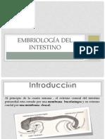 EMBRIOLOGÍA Y ANATOMÍA DEL INTESTINO final