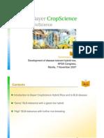 BLB Tolerant Hybrid Rice APSA