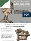VB Skeleton AtlasAxis