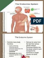 endocrine Final.ppt