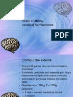 emisfere cerebrale