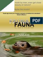 Fauna