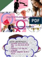Ciclo Menstrual Expo