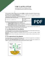 Funciones de Las Plantas