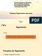 Universidade Estadual do Maranhão-aves