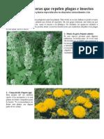 6 Plantas Que Repelen Plagas
