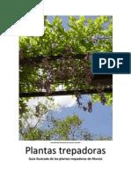 Guia de Plantas Trepadoras