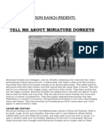 Tell Me About Miniature Donkeys
