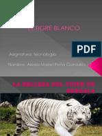 El Tigre Blanco (2)