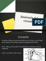 Expo Anatomia Del Corazon