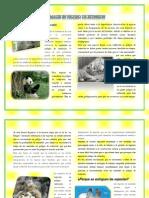 Articulos de Revista