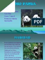 El Oso Panda Anyelinna