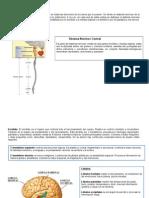 esquemas_glosario_matriz_Teillier.doc