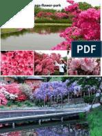 Ashikaga - Flower Park