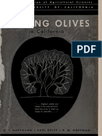 Pruning Olives Hart