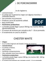 porcinos[1]