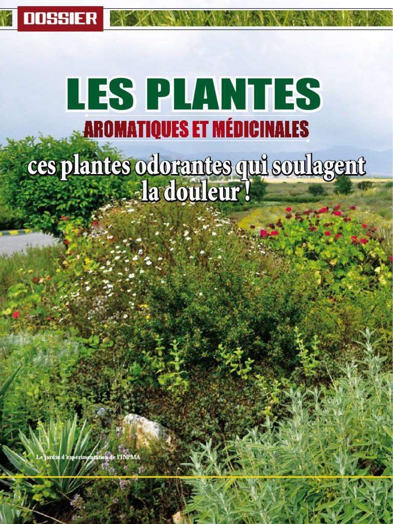 Plantes aromatiques et m dicinales du maroc for Plantes aromatiques