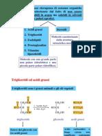 18 Lipidi 2011 (1)
