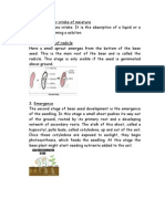 Stages of Bean Seed Germination