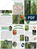 FOLLETO BROMELIAS.pdf