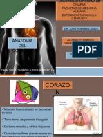 anatomia corazon.pptx