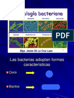 morfologayestructurabacteriana-100423113824-phpapp02