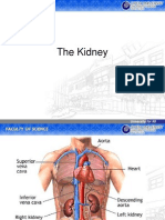 Topic 8_ the Kidney
