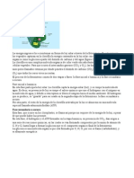 Tarea_fotosintesis_camila.doc