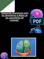 Asimetria Cerebral