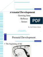 Prenatal Development CHILD