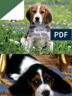 Los 10 Mandamientos de Una Mascota Arreglos iSa (1)