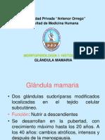 Histologia de La Glandula Mamaria