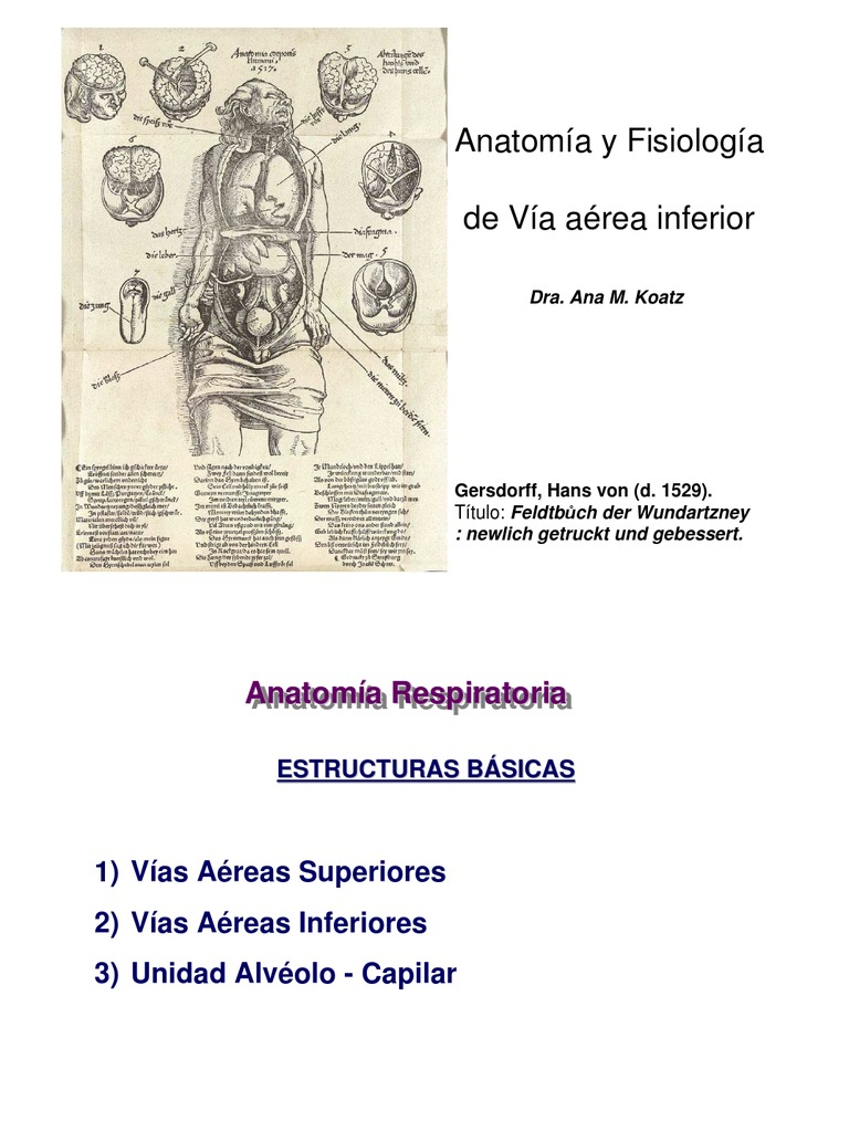 Anatomofisio via Aerea Inferior(1)
