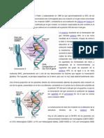 hemocromatosis.docx