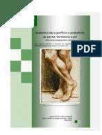 Anatomia de Superfície e Palpatória da Perna, Tornozelo e Pé
