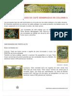 VARIEDADES DE CAFÉ SEMBRADAS EN COLOMBIA(sena)