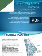 Lactancia y glándula mamaria