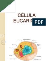Celula Eucariota Trabajo en Grupo Resumido