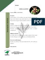 Ficha Tecnica Plantas