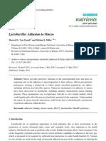 Lactobacillus Adhesion Mucus