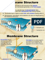 cell membrane and passive transport edit ba