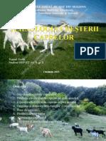 Tehnologia Creşterii Caprelor, Panaid Vasilii