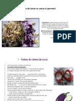 Rawfood-salate_pateuri.pdf