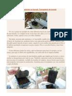 Cómo transplantar un bonsái