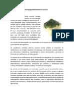 ENFERMEDAD POR DEPÓSITO DE HIDROXIAPATITA CALCICA