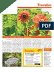 The Hindu Traveler Guide - 19th Apr 2013