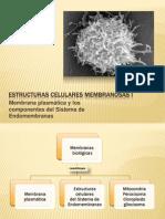 ESTRUCTURAS Celulares Membranosas I