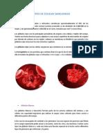 Tipos de Celulas Sanguineas